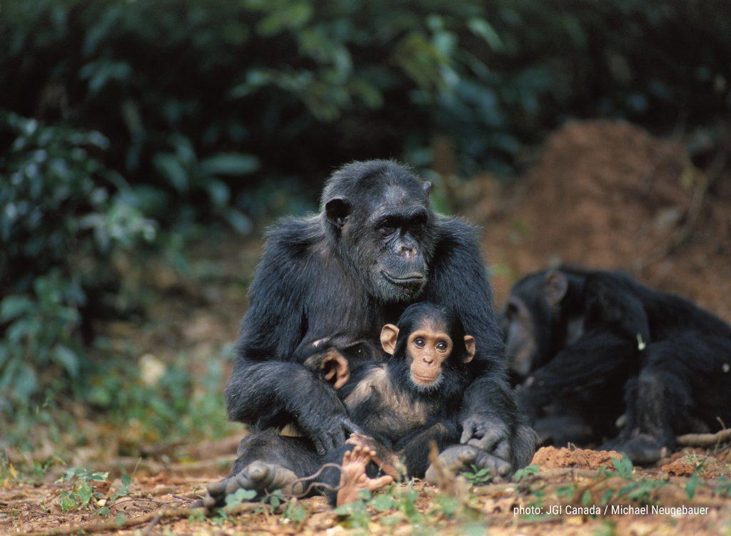 Forever Wild #4everwild Jane Goodall Institut Schweiz