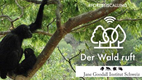 Der Wald ruft JGI - Switzerland