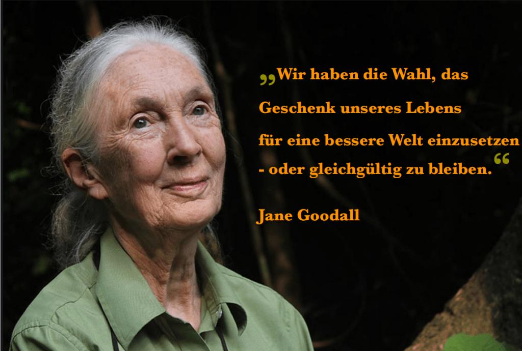 Helfen Jane Goodall Institut Schweiz