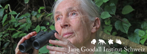 Jane Goodall 85 Birthday