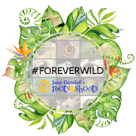 #Foreverwild Roots and Shoots JGI Schweiz
