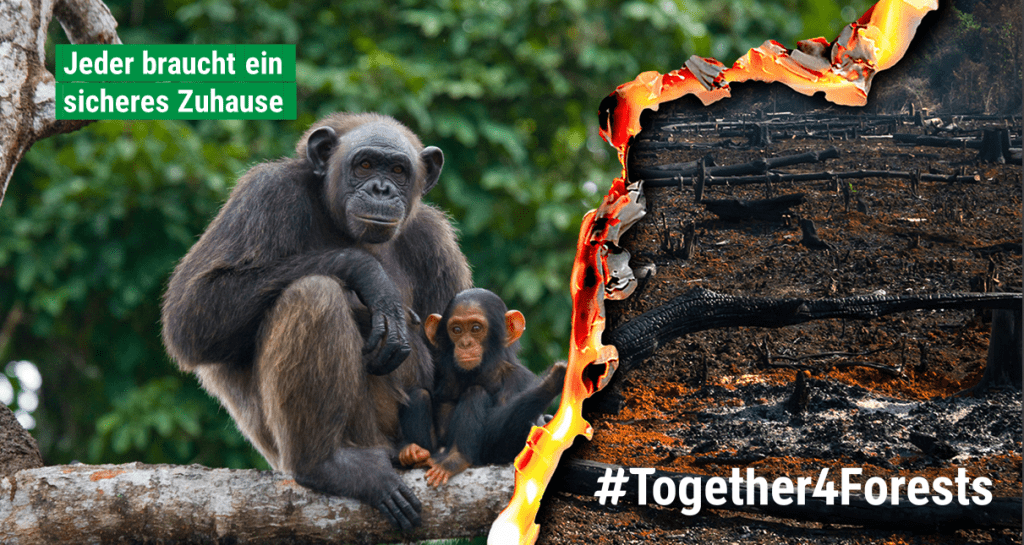 #together4forests JGI Schweiz