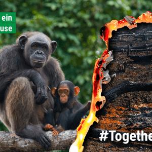 #together4forests JGI Schweiz