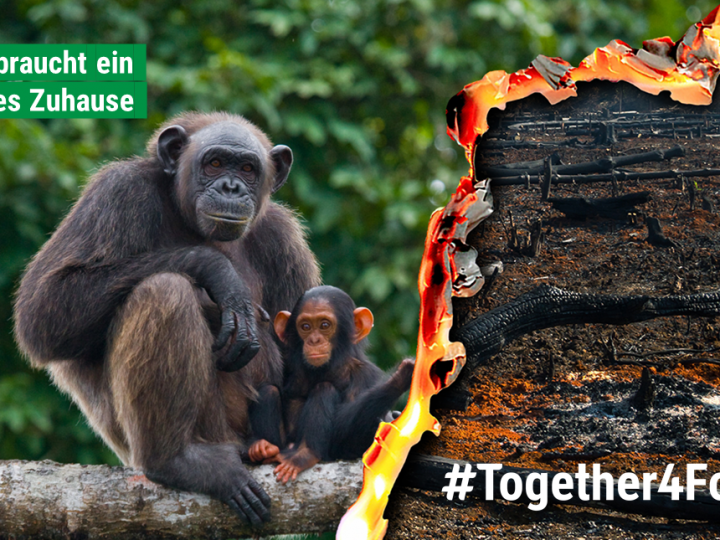 #Together4Forests