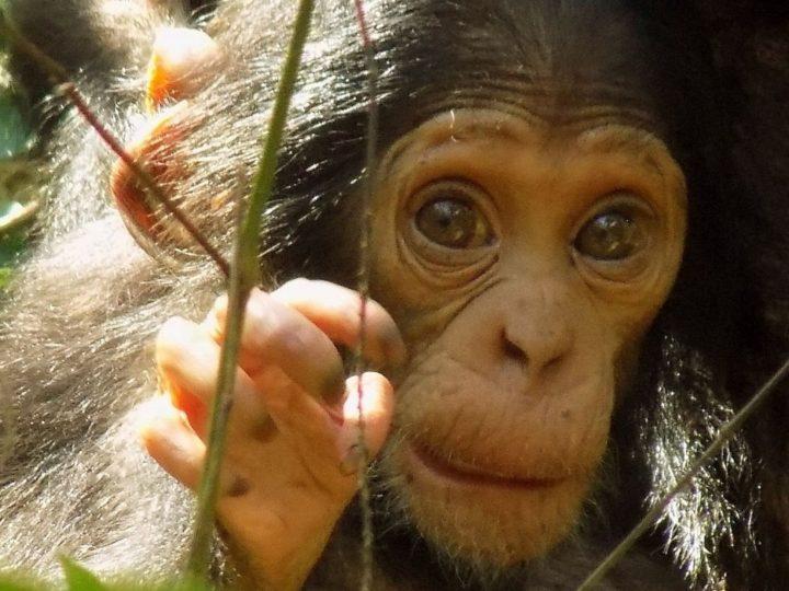 Brunnen für Menschen und Schimpansen